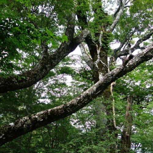 Sich stützende Bäume