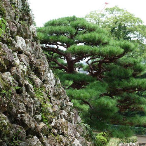 Pfad zur Burg Kōchi
