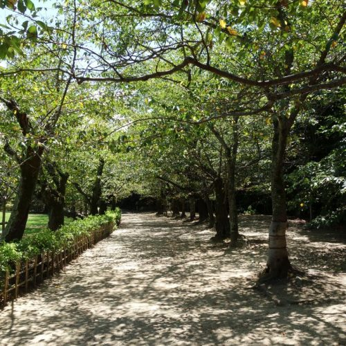 Ritsurin Garten #1