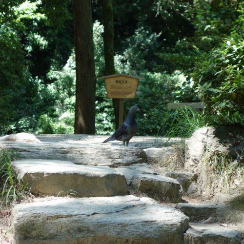 Ritsurin Garten #9