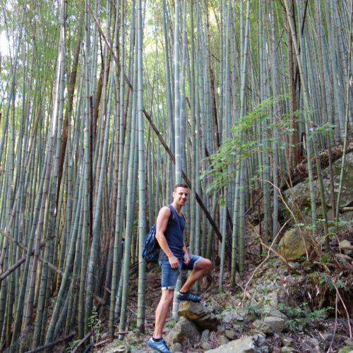 Ein Bambuswald und Sven zum Vergleich