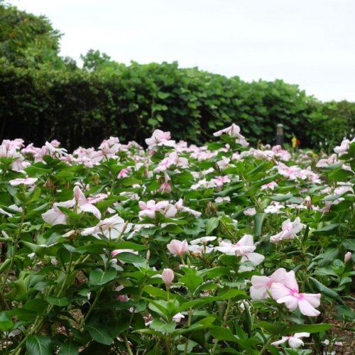 Enoshima Sightseeing #17