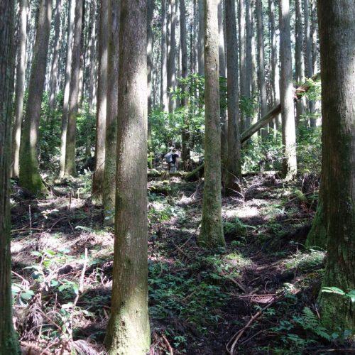 Sokusawa Trail #6