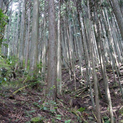 Sokusawa Trail #7
