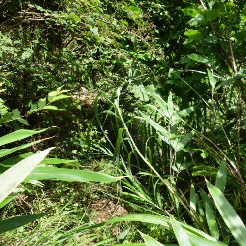 Sokusawa Trail #4