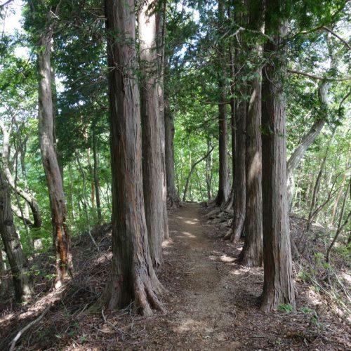 Weg von Monjudake nach Yashudake #3