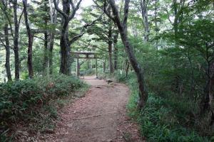 Torii zum Gebiet des Ishizuchi